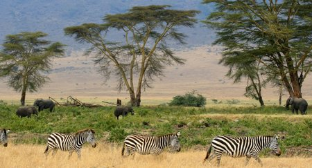 Park Narodowy Serengeti fot. Flickr, Gary