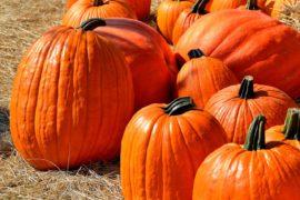 pumpkins-1572864_1280
