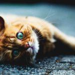 Korzyści z posiadania kota