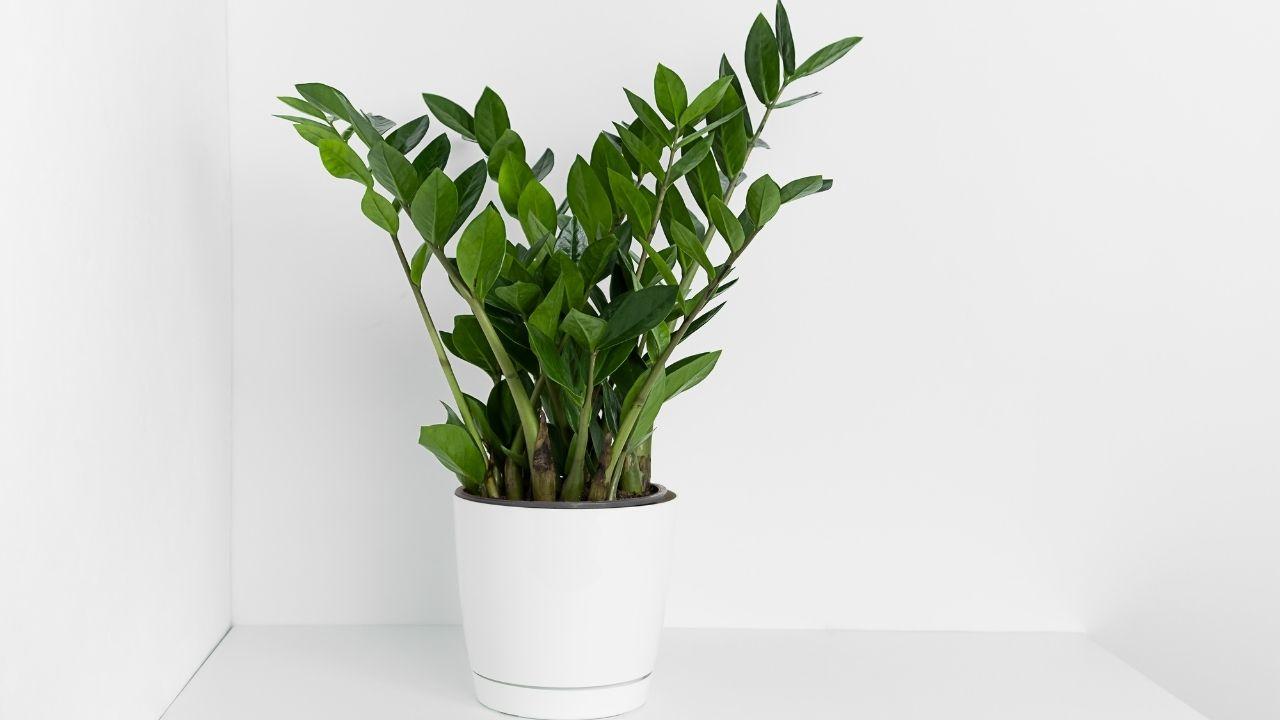 zielony kwiat w białej donicy na białym blacie