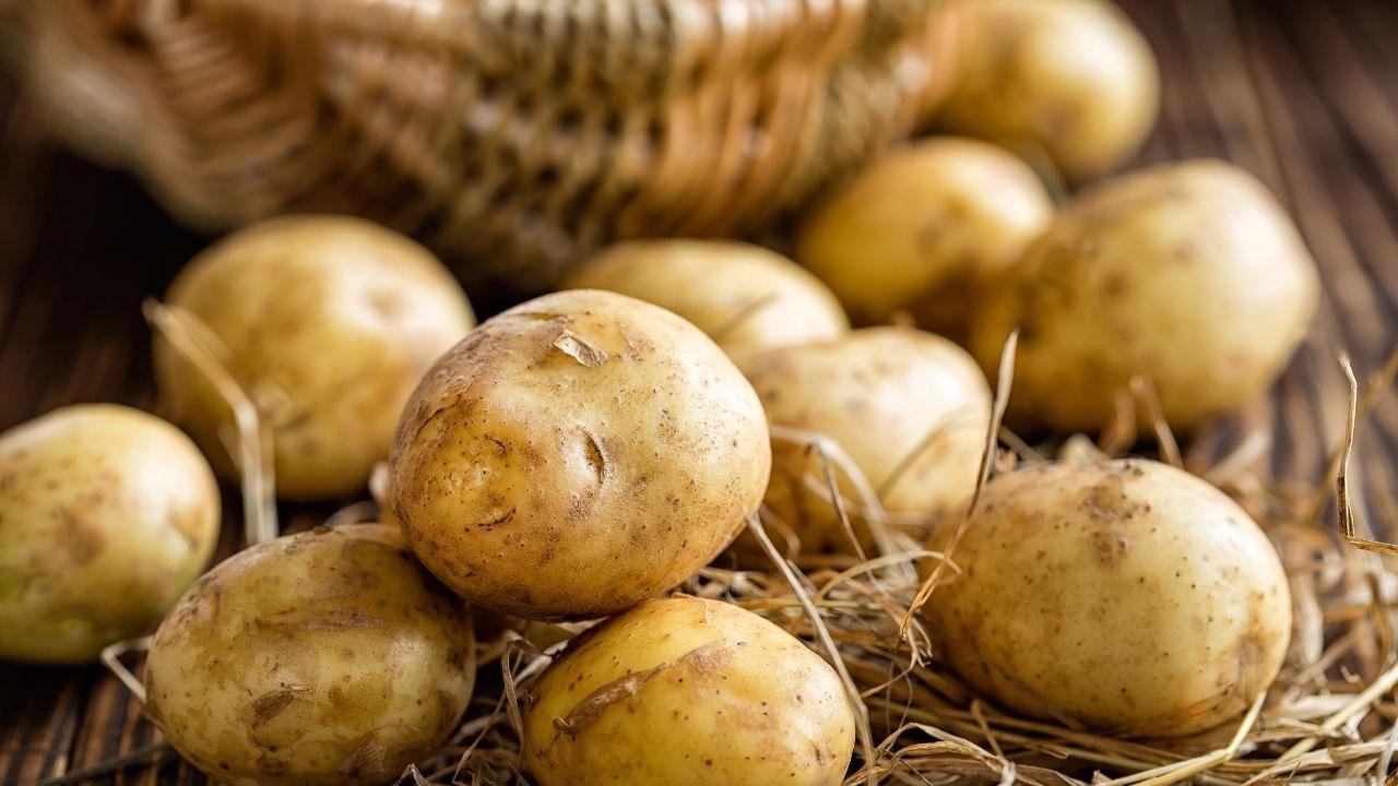 młode ziemniaki zebrane z pola
