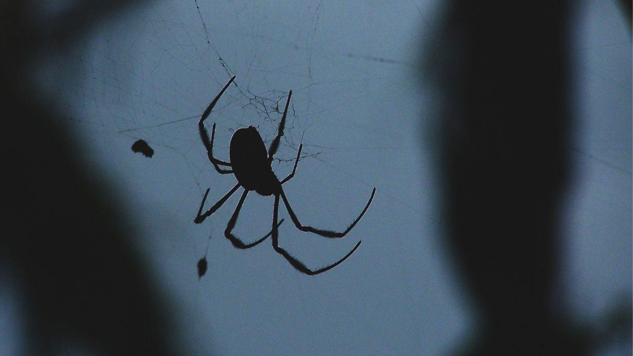 pająk wiszący na tle okna nocą