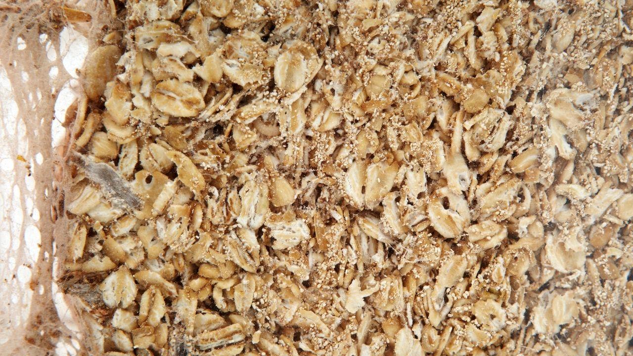 mole spożywcze w płatkach owsianych